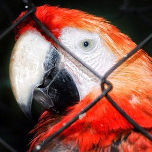 expanzoo-ig-caracas-ig-venezuela-gf-ve-insta-ve-guacamaya-fotovzla-instafoto-ve-instahdr-ve-mipais_t20_WEkklm